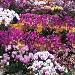 おでかけ もうすぐ春節 花市の終わり(2枚目)