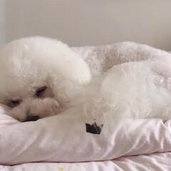 犬派 眠いんです💤