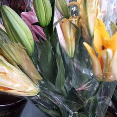 おでかけ もうすぐ春節 花市の終わり(7枚目)