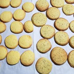 クッキー/スイーツ プレーンクッキーと紅茶のクッキー🍪を沢山…(2枚目)
