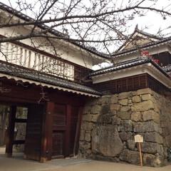 上田城/城/城址/城址公園/お城/おでかけ/... * 難攻不落の上田城🏯 桜が有名らしいで…(2枚目)