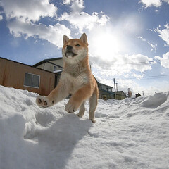 子犬/GoPro/柴犬/LIMIAペット同好会/フォロー大歓迎/ペット/... 冬は雪でいっぱい遊んだよ〜❄️🐶💖