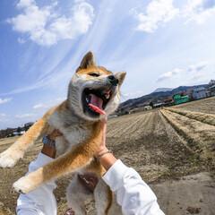 GoPro/LIMIAペット同好会/フォロー大歓迎/はじめてフォト投稿/ペット仲間募集/犬/... GoProでつくねちゃんスマイルをキャッ…