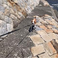 犬の散歩/犬/フォロー大歓迎/わんこ同好会 日曜日の カルビお散歩🌱🌱🌱  水飲もう…(2枚目)