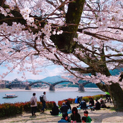 お花見/バーベキュー/風景/住まい/LIMIAお出かけ部/フォロー大歓迎/... 桜の貴重なこの季節。  お昼休みや夕方に…(2枚目)
