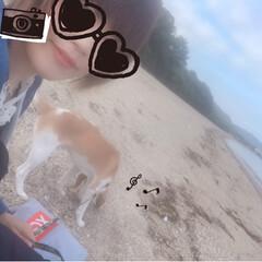 犬の散歩/犬/フォロー大歓迎/LIMIAペット同好会/わんこ同好会 海🏖🐠☀️ 今日は暑くなりそ*.。.:*…