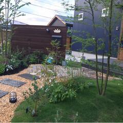 芝生の家/庭/緑のある暮らし/庭のある暮らし/フォロー大歓迎/暮らし 芝がだいぶ生え揃ってきました (*´▽`…