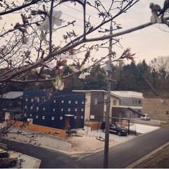 自然/花/桜 昨日、 🌸染井吉野🌸を植えました(❁´ω…