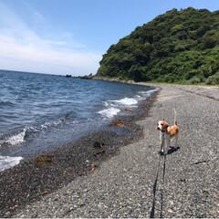 犬の散歩/犬/フォロー大歓迎/わんこ同好会 日曜日の カルビお散歩🌱🌱🌱  水飲もう…(8枚目)