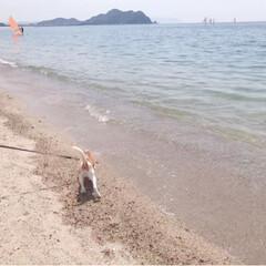 犬の散歩/ビーグル/犬/フォロー大歓迎/LIMIAペット同好会/わんこ同好会/... 海が大好き💕カルビ🐶