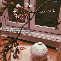 フレンチインテリア/シャビーシック/洋書/癒しの空間/桜/お花見/... *:,.:.,.*2019.4.4(Fr…