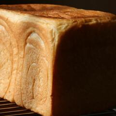 自家製酵母/自家製酵母パン/角食パン パン焼き記録。