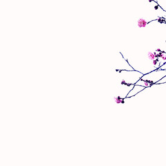 早咲き梅 早咲き梅