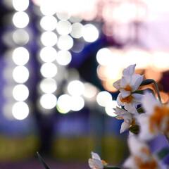 トワイライト/夕焼け/花 ピンボケですが トワイライトと団地の光が…