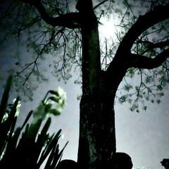 ウルフムーン/満月 今日はウルフムーン(1月の満月) ウルフ…