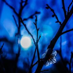 いいねTop10決定戦/お弁当のおかず&便利グッズ/LIMIAFESTA/キャンドゥ/ダイソー/セリア/... 夜に咲く