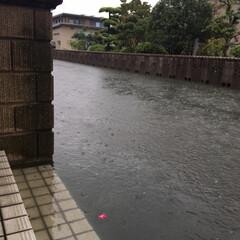 猫膀胱炎/災害/LIMIAペット同好会/にゃんこ同好会 長崎、佐賀、福岡。観測史上初の雨量だとか…