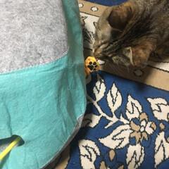 猫派/LIMIAにゃんこ同好会/猫グッズ 近所の猫親さんから母がお礼にと猫グッズを…