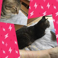 猫運動会/猫派/ひっかきキズ/LIMIAペット同好会/にゃんこ同好会 お見苦しい写真で失礼します。  今朝5時…