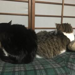 大根の葉っぱのふりかけ/なまり節/ニャンニャンニャンの日/LIMIAペット同好会/猫派 今日は2/22 ニャンニャンニャンの日で…