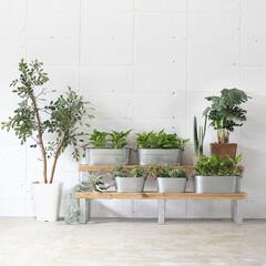 DIY/壁面収納/はしご型/収納/穴あけ不要/HANG/... 無機質なデザインの金具と、緑や木のぬくも…