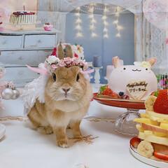お誕生日飾り/うさぎ/リミアの冬暮らし/住まい/ファッション/おすすめアイテム/... 2歳のお誕生日🎉🎂💗