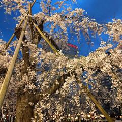 おでかけ/春/spring/CherryBlossoms/空/夜桜/... 夜桜のお花見に行きました🌸 めちゃくちゃ…