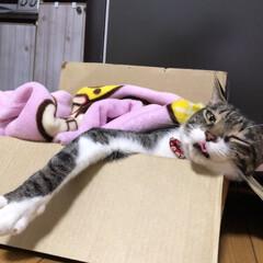 舌出し/ペロッ/ウインク猫/愛猫家/猫好き/猫部/... ・ 舌出しウインク( •ω-  )☆ ・