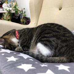 寝てる/動物好き/もふもふ/可愛い/ごめん寝/寝相/... ・ お手本のような こまちのごめん寝♡♡