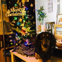 クリスマス2019/リミアの冬暮らし/ダイソー/キッチン雑貨/雑貨/住まい/... 「初めて見る!」のだワン!  ボクん家…