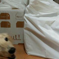 犬カフェCOCOMO/サングラス/クリン/おすすめアイテム/フォロー大歓迎/LIMIAファンクラブ/... 「(番外編)クリン🐶ォレ様兄貴だ!」Ze…(5枚目)