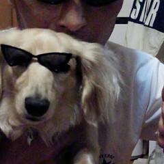 犬カフェCOCOMO/サングラス/クリン/おすすめアイテム/フォロー大歓迎/LIMIAファンクラブ/... 「(番外編)クリン🐶ォレ様兄貴だ!」Ze…(6枚目)