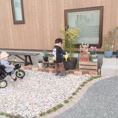手作りガーデニング/水やり/ガーデンベンチ/玄関アプローチ/ガーデニング/住まい/... 玄関横の庭です。 一から庭づくりをしまし…