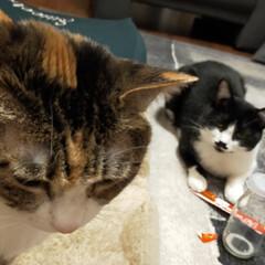 癒やし/猫のいる暮らし 最近の猫たち😺(6枚目)
