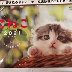 カレンダー/猫と暮らす/プチプラカレンダー 来年2021年の猫ちゃんカレンダーを買い…