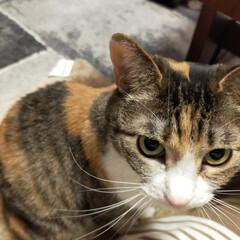 癒やし/猫のいる暮らし 最近の猫たち😺(1枚目)