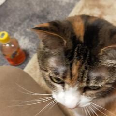 癒やし/猫のいる暮らし 最近の猫たち😺(4枚目)