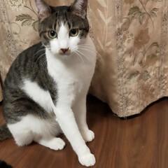 猫のいる暮らし 今日は母の眼科 手術後の経過観察 もみじ…(5枚目)