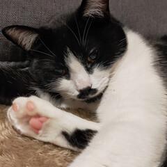 癒やし系/猫のいる暮らし よく遊び最近甘えん坊になってきたマリの特…(4枚目)