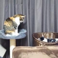 猫のいる暮らし 今日は母の眼科 手術後の経過観察 もみじ…(3枚目)