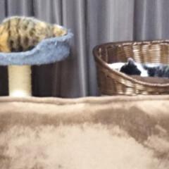 猫のいる暮らし 今日は母の眼科 手術後の経過観察 もみじ…(2枚目)