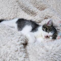 猫のいる暮らし 今日は母の眼科 手術後の経過観察 もみじ…