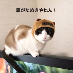 被り物/猫好き/LIMIAペット同好会/ペット/ペット仲間募集/猫/... かぶりもの担当のpipiです℗ ママンが…