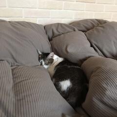 癒される/猫好き/寝顔/ねんねこ/ペット/ペット仲間募集/... 埋もれてる。◟̆◞̆☽⋆