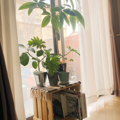 植物/植物のある暮らし/インドアグリーン/リミアな暮らし/DIY/おすすめアイテム/... 今日は久しぶりに天気も良くて、あたたかい…(1枚目)