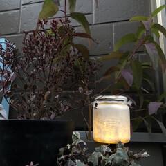 ソーラーライトリメイク/ソーラーライト/ソーラー/ガーデンライト/ガーデン/リミアな暮らし/... ダイソーで購入した、ツルツルのペットボト…