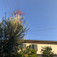 イマソラ/空/オリーブ/庭 今日は昨日に比べて暑すぎず、爽やかな秋晴…