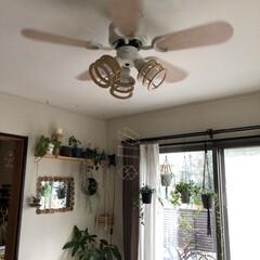 シーリングファン/シーリングライト/シーリング/照明/住まい/おすすめアイテム/... 我が家のリビングのライトはコレ!  シー…