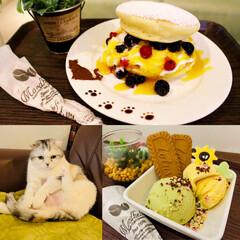 スコティッシュフォールド/カフェメニュー/アイスクリーム/パンケーキ/猫/猫カフェ/... 新しく仲間になった 新メニュー♡2つ  …