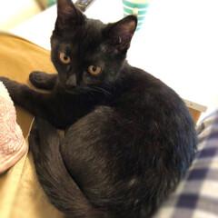 子ねこ/猫/黒猫 明けまして おめでとうございます🎍  家…